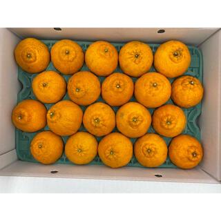 鹿児島県産 デコあま20玉(フルーツ)