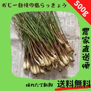 島らっきょう 500g(野菜)