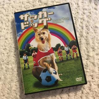 サッカードッグ DVD 美品(洋画)