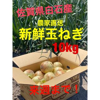 佐賀県白石産玉ねぎ 10kg 農家直送‼︎新鮮あま〜い‼︎(野菜)