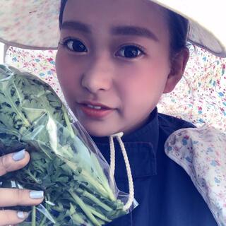 【綾善farm】農薬不使用の野菜セットM 8〜10品(野菜)