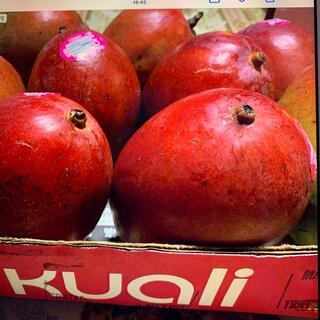 コストコ、アプルマンゴー メキシコ産、4.2キロ9個入り(フルーツ)