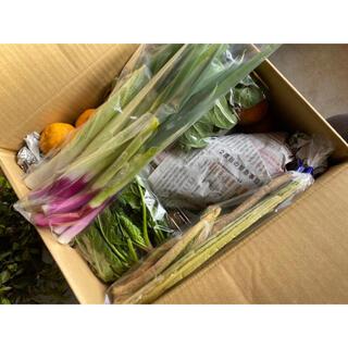 【茨城県産】旬の野菜・山菜詰め合わせ