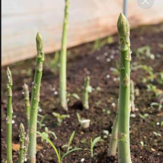 タイムセール‼️アスパラ種50粒(野菜)