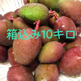 摘果マンゴー(青マンゴー)箱込み5キロ(フルーツ)