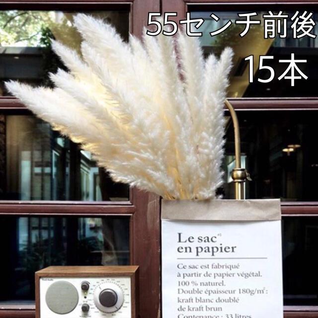 パンパスグラス 15本 ドライフラワー インテリア ホワイト インスタ 結婚式 ハンドメイドのフラワー/ガーデン(ドライフラワー)の商品写真