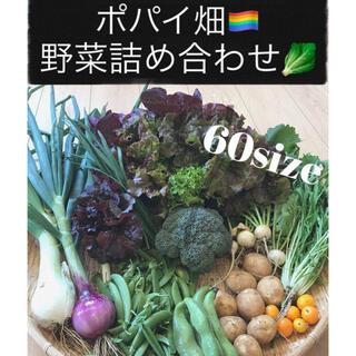 ポパイ畑野菜詰め合わせ60size*ʕ•ᴥ•ʔ*即購入可