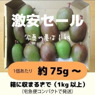 [激安:橙]1キロ以上 グリーンマンゴー 青マンゴー 加工用 マンゴー(フルーツ)