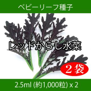 ベビーリーフ種子 B-22 レッドからし水菜 2.5ml 約1000粒 x 2袋(野菜)