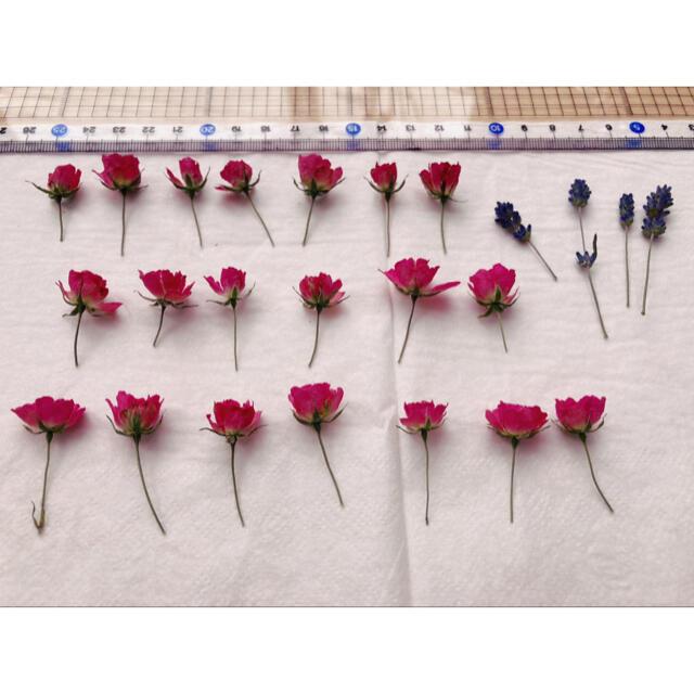 ミニ薔薇みさきドライフラワー ハンドメイドのフラワー/ガーデン(ドライフラワー)の商品写真