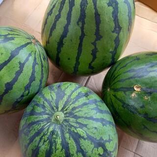熊本県産植木すいか B級品 家庭用お任せ2玉セット(フルーツ)
