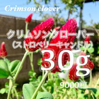 30gのクリムソンクローバー、クリムゾンクローバー、ストロベリーキャンドル(その他)