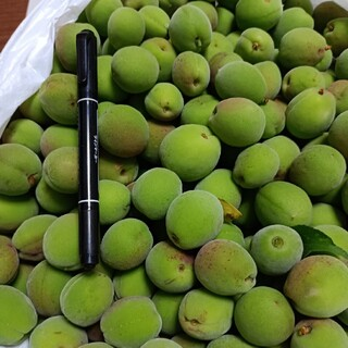 ※※大幅値下げ※※ 奈良県産 梅の実 約1.4kg  無農薬