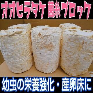 みかん様専用 オオヒラタケ廃菌床6ブロック(虫類)