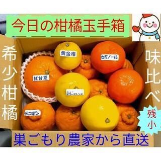 残少❗今日の柑橘玉手箱♥雪だるま=巣ごもり農家から直送中
