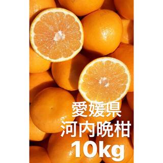 愛媛県 宇和ゴールド紅 河内晩柑 10kg(フルーツ)