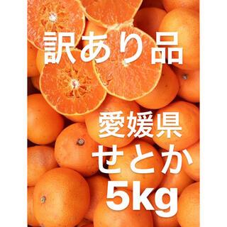 訳あり品 愛媛県 せとか 5kg(フルーツ)