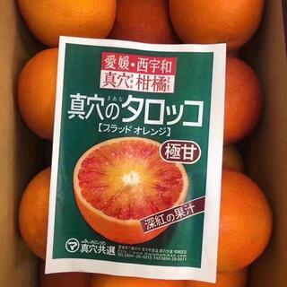 愛媛県産極甘柑橘(フルーツ)