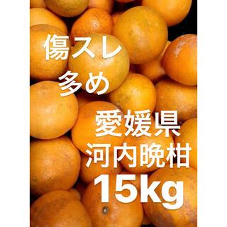 愛媛県 宇和ゴールド 河内晩柑 傷スレ多め ジュース用 15kg(フルーツ)