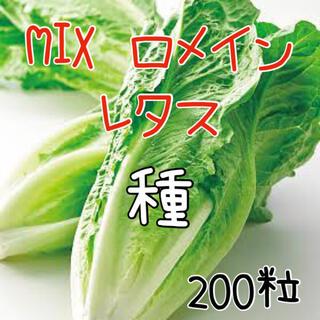 200粒 MIXロメインレタス♡ 2色家庭菜園 水耕栽培 コスレタス 野菜 種 (野菜)