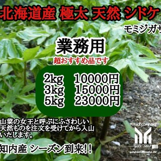 北海道産 天然シドケ3kg 業務用(野菜)