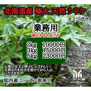 北海道 木古内町産 シドケ 3kg モミジガサ(野菜)