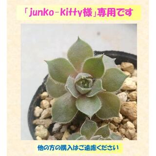【0548】 「Pink Cham」「Irazu」「Lavender Lace」(その他)