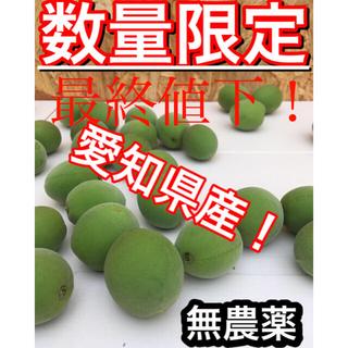 【梅約1.5kg】愛知県産※無農薬(フルーツ)