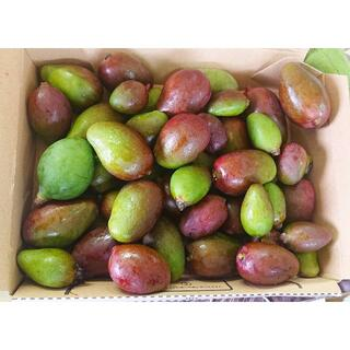 沖縄本島産 今季初物 摘みたて青マンゴー 1Kg♪(フルーツ)