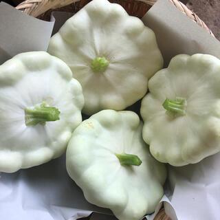 UFOズッキーニの種 20粒(野菜)