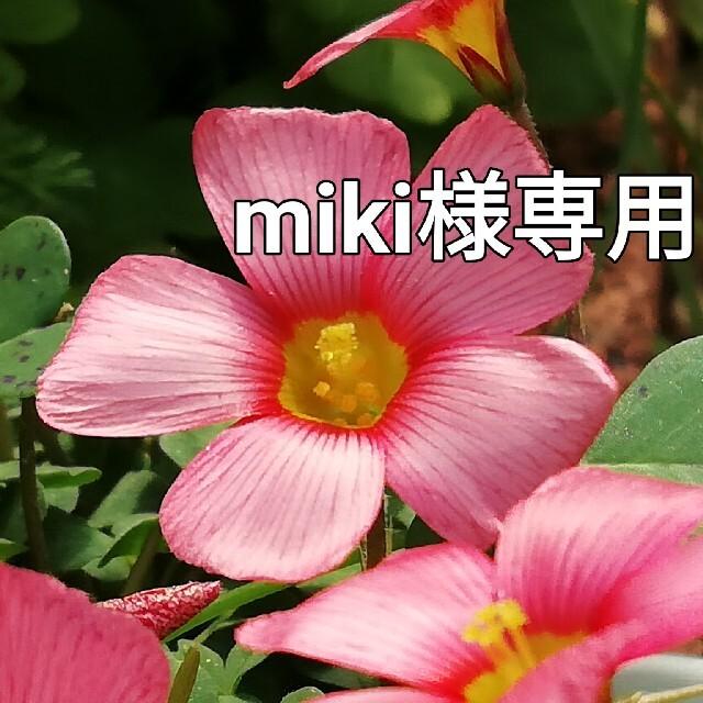 ♥オキザリス球根 オブツーサ ハンドメイドのフラワー/ガーデン(プランター)の商品写真