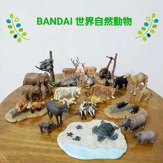 バンダイ(BANDAI)の【BANDAI】バンダイ 世界自然動物〈アジア・オセアニア編〉食玩 フィギュア(その他)