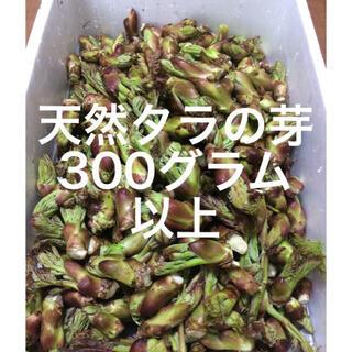 山形県産 天然タラの芽 300グラム以上
