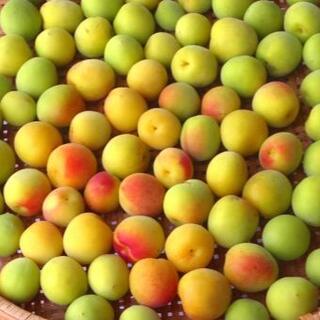 青梅(南高梅)5kg 完熟梅 かわりもさん専用ページ(フルーツ)