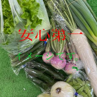 無農薬野菜 ♡岐阜からと詰め合わせ♡♡(野菜)