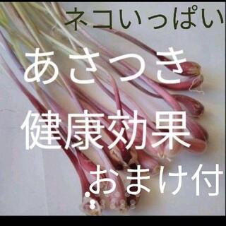 北海道無農薬安心 あさつき苗 ネコポスいっぱいとオマケ付き(野菜)