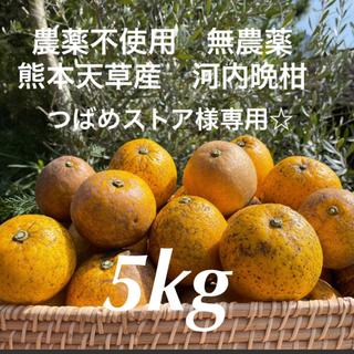つばめストア様専用☆ 農薬不使用 無農薬 河内晩柑5kg  熊本天草産(フルーツ)
