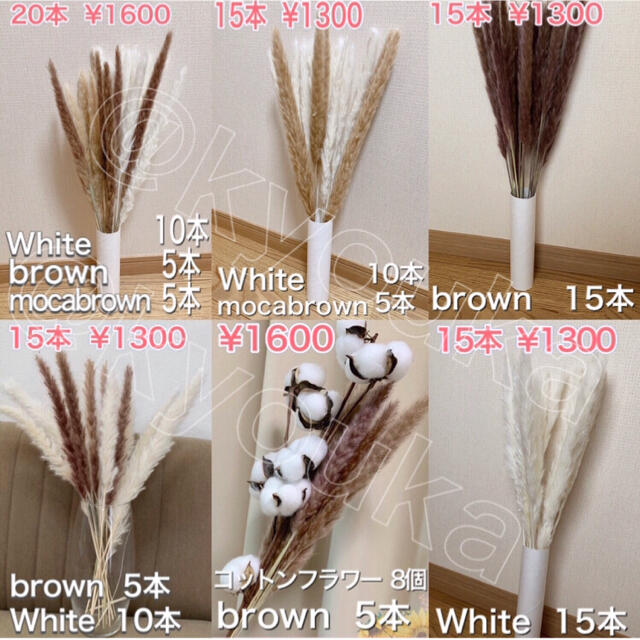 パンパスグラス 白10本 モカ5本 セットドライフラワー テールリード ハンドメイドのフラワー/ガーデン(ドライフラワー)の商品写真