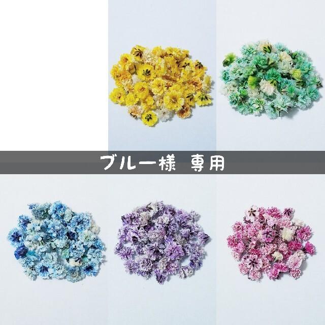 【ブルー様専用】かすみ草のドライフラワー ハンドメイドのフラワー/ガーデン(ドライフラワー)の商品写真