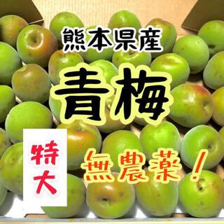 熊本県産 大サイズ青梅 無農薬 1キロ