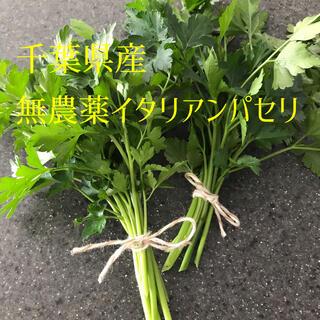 発送直前に摘みたてフレッシュ無農薬イタリアンパセリ50g匿名配送(野菜)