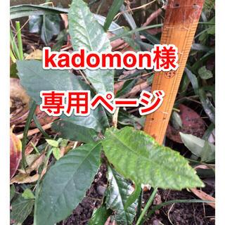 kadomon様 専用(野菜)