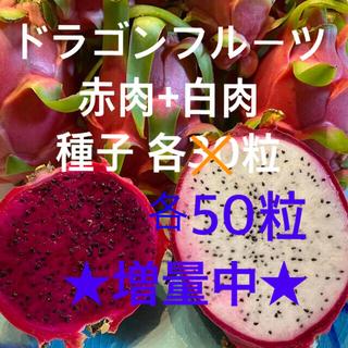 ドラゴンフルーツ★種子 【赤肉30粒+白肉30粒】(その他)