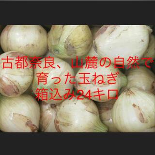 玉ねぎ 玉葱 新玉葱 (野菜)