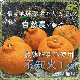 不知火1kg無農薬ビーガンスイーツ世界平和デトックスフルーツ自然農法エコ自然栽培(フルーツ)