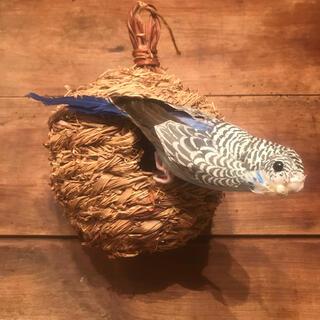 【新品未使用】青い鳥&鳥籠(プランター)