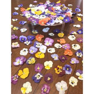100円お値引き‼️銀の紫陽花が作った彩りビオラのドライフラワー山盛り70冠‼️(ドライフラワー)