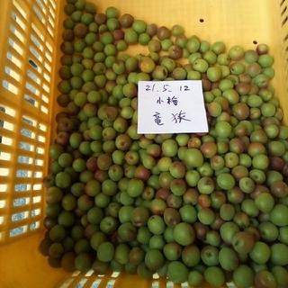 梅。小梅1k。広島県産。無農薬。サイズ混。品種『竜峡』(フルーツ)