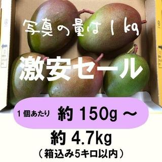 [激安:紫]約4.7キロ グリーンマンゴー 青マンゴー 加工用 マンゴー(フルーツ)