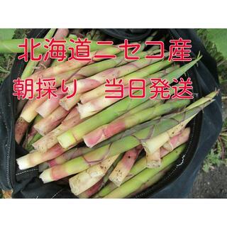 ☆★北海道産根曲がり竹 ネマガリタケ タケノコ 朝採り1.3キロ送料無料!★☆